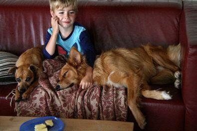 Jonas en hondjes 2 k