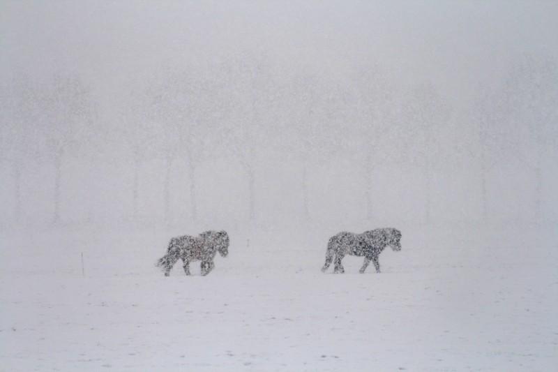 Sneeuwpaardjes-002