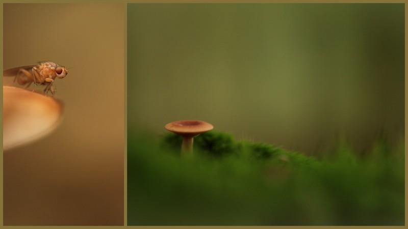 blog minimalistisch1