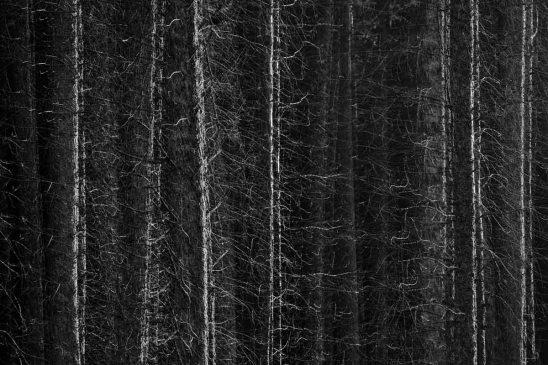In het donkere bos (meervoudige belichting)