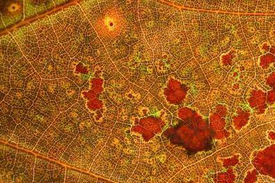 De oude landkaart