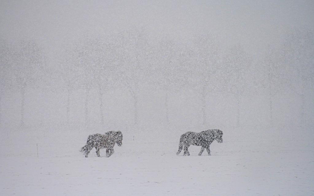 Sneeuwpaardjes-3